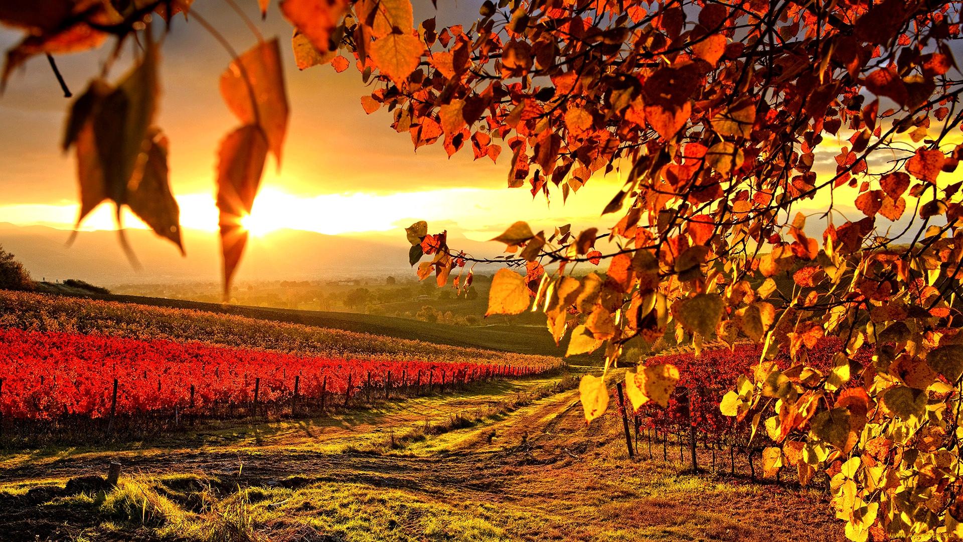 картинка на стол рабочий осень